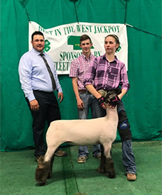 Fairwether Club Lambs :: Winners